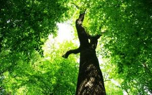 Μελέτη αεροφωτογραφιών για τον προσδιορισμός της ηλικίας δέντρων
